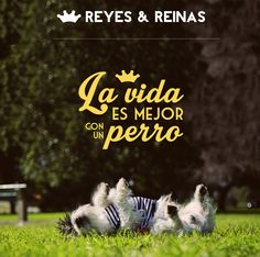 Primavera Verano / Pug / Jack Russell Terrier / Poodle / Caniche / Plaza / Juegos / Park / Happy dog / Fashion Dogs Dog Fashion, Jack Russell Terrier, Happy Dogs, Poodle, Pugs, Movie Posters, King Queen, Spring Summer, Dogs