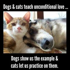 Sometimes I think cats and dogs are here to teach us unconditional love . dogs show us the example and cats let us practice on them. Health Mantra, Genuine Love, Little Critter, Cat Health, Show Us, Dog Show, Unconditional Love, Cool Cats, Good Vibes