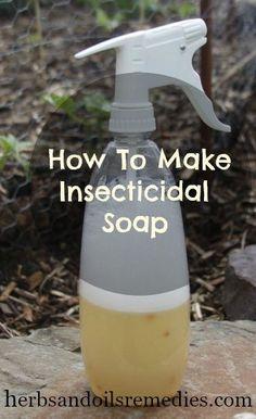 Come fare in casa insetticida sapone per le piante.  Molto a buon mercato e conveniente troppo ..