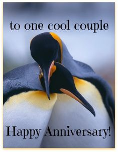 To one cool couple anniversary wedding anniversary happy anniversary happy anniversary quotes anniversary quotes for friends best anniversary quotes anniversary quotes for friends and family happy anniversary wishes Wedding Anniversary Quotes For Couple, Happy Wedding Anniversary Wishes, Anniversary Quotes Funny, Anniversary Greetings, Wedding Quotes, Anniversary Pictures, 7th Anniversary, Wedding Wishes, Wedding Cards
