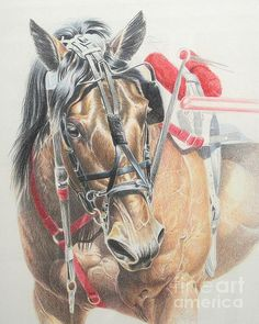 Beautiful artwork of a standardbred n harness & hooked up to a sulky