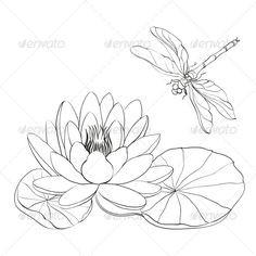 Water Lily and Dragonfly. Water Lily and dragonfly isolated over white. Created: GraphicsFilesIncluded: JPGImage Layered: Yes MinimumAdobeCSVersion: CS Tags: animal Dragonfly Drawing, Dragonfly Art, Silk Painting, Painting & Drawing, Pencil Drawings, Art Drawings, Lilies Drawing, Lily Pad Drawing, Garden Illustration