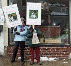 Camden residents want local restaurants to stop serving rabbit for lunch, dinner | PenBay Pilot
