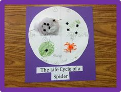 Let your students create the life cycle of a spider with 3 simple items.