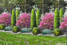 Brzozy i magnolie - GardenPuzzle - projektowanie ogrodów w przeglądarce