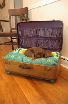 old suitcase dog bed. Go to flea markets, Salvation Army thrift store, buy an old suitcase and make your own pet bed. Old Suitcases, Cat Run, Tier Fotos, Pet Beds, Doggie Beds, Four Legged, Mans Best Friend, Dog Life, Fur Babies