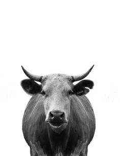 Today's freebie is a Minimal Cow. To give it an artistic feel, I put her on a white background with a black and white filter. This printable looks simple but alot of photoshop went into it. I spent a long time cutting out the grass …