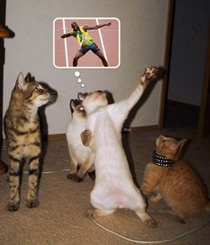 "Funny Cat's image : ""Let's dance rock n roll."" Photo: These funny cats pictures are really cute on acting , . the funy cats pictures has bee. Funny Shit, Funny Cats, Funny Animals, Cute Animals, Hilarious, Lmfao Funny, Funny Humor, I Love Cats, Crazy Cats"