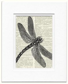 dragonfly vintage artwork printed on page from by FauxKiss