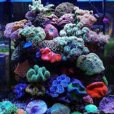 Beautiful reef tank and corals Saltwater Aquarium Beginner, Saltwater Aquarium Fish, Saltwater Tank, Marine Fish Tanks, Marine Tank, Coral Reef Aquarium, Marine Aquarium, Poisson Mandarin, Mandarin Fish