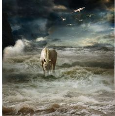 """""""A Horse In The Storm"""" by mima-99 ❤ liked on Polyvore"""