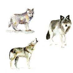 3 Art prints of Wolf watercolor paintings    They are also separate available:  https://www.etsy.com/nl/shop/Zendrawing?section_id=13162770    Size of