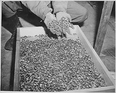 (Photo, Wedding Rings Removed by the Germans from Holocaust Victims, May 5, 1945, Department of Defense, NARA, NAIL Control Number: NWDNS-111-SC-206406 ) Construct an understanding of the Holocaust using photos in this lesson plan from the U.S. Holocaust Memorial Museum. Click above