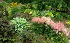 A visit to Anna's Perennials - shade garden