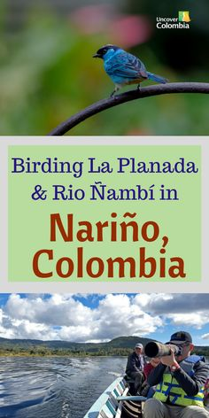 Birding in Colombia