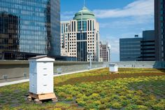 Green Roofs & Green Walls: Living Architecture Takes Root Across U.S.