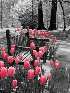Helpful Organic Gardening Information, Advice, And Tips – Flowers and Gardening Splash Photography, Color Photography, Black And White Photography, Love Flowers, Beautiful Flowers, Beautiful Life, Spring Flowers, Color Splash, Pink Color