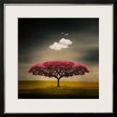 Medusa Cloud Framed Photographic Print by Philippe Sainte-Laudy at Art.com