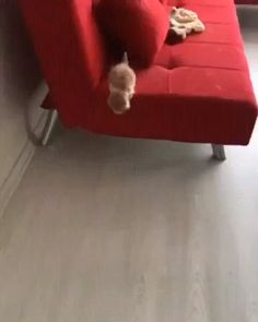 Cute Funny Animals, Cute Baby Animals, Animals And Pets, Cute Cats, Funny Cats, Tiny Kitten, Little Kittens, Kittens Cutest, Cats And Kittens