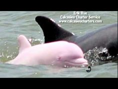 Insanely rare pink dolphin spotted in Louisiana lake (Photos)