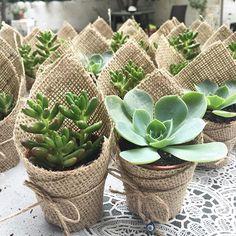 WEBSTA @ bitkiaskina - ♻️Istediginiz bitki fotograflarinizi #bitkiaskina tagleyiniz veya @bitkiaskina etiketleyiniz , sayfamizda paylasalim  ➖➖➖➖➖➖➖➖➖➖➖➖➖➖➖➖♻️Post your plants pictures #bitkiaskina tag and tag @bitkiaskina i will repost  ➖➖➖➖➖➖➖➖➖➖➖➖➖➖➖➖ Photo by @sukulent_sehri ➖➖➖➖➖➖➖➖➖➖➖➖➖➖➖➖ #sukulent #kaktus #sukkulent #minibahce #minyaturbahce #bahce #tasarim #minigarden #sukulentas #minyaturobje #cicek #çiçek #aranjman #hediye #kaktüs #saksi #ahsapsaksi #balkon #kisbahcesi