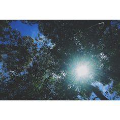 {130-THE TREE OF LIFE 2011} There are two ways through life … the way of Nature… and the way of Grace. Ci sono due vie per affrontare la vita: la via della natura, e la via della grazia. -Terrence Malick-  #vsco #vscoph #VSCOcam #vscogrid #vscoshots #vscomoment #igers #instavsco #ig #instacool #instagood #vscophile #photooftheday #instacyool #instagramer #instadaily #instagood #instagramhub #tbt #follow #instamood #bestoftheday #picoftheday #365movie #365project #tree