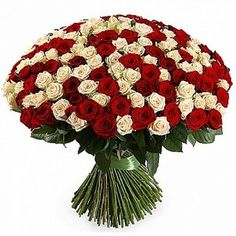 Розы Талея кремовая с красной микс 50 см. Букет кремовых и красных роз 201 шт. (Эквадор)
