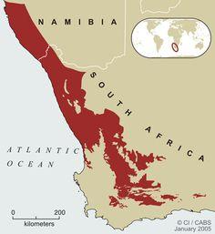Biomes, Atlantic Ocean, Biology, Africa, Map, Succulents, Naturaleza, Location Map, Maps