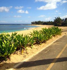 Heading out to the North Shore on Oahu for a great relaxing day.