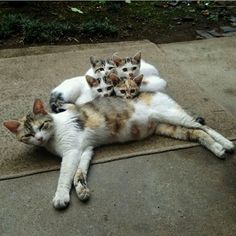 Mommy and her kittens