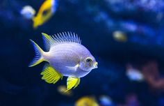 Cute fish by tuntun on 500px