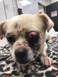 Help Save CharlesWe are reposting this video because for some reason it is gone. I am sorry but we still need your help for Mr. Charles. Please read more about him here http://dogco.org/save-charles-rdrPosted by Hendrick & Co. on Sunday, December 11, 2016 Who can imagine anyone hitting a 12-pou