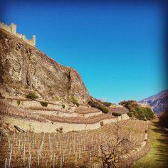 Château Tourbillon #castle #tourbillon #Sion #valais #Switzerland #swissalps #Alps #vine by jo_b_o