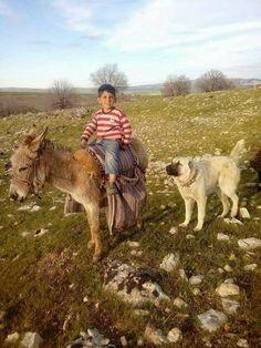 Çocukluk anılarımız Shepherd Dog, Kangaroo, Cow, Turkey, Animals, Baby Bjorn, Animaux, Animal, Animales