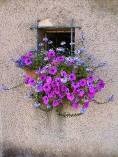 Alsace by Annina - anna.deho, via Flickr