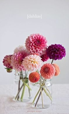 Dahlia Photo Print - flower still life dahlias in jars lifestyle botanical art flower photography wall hanging gifts for her pink by GreengatePhotography on Etsy Spring Flowers, Dahlia Flowers, Bouquet Flowers, Bouquets, Purple Flowers, Tulip Bouquet, Cactus Flower, Exotic Flowers, Tropical Flowers