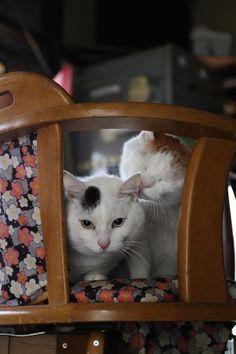 かご猫 Blog 動画・