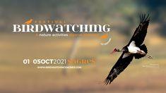12º Festival de Observação de Aves & Atividades de Natureza Nature Activities, Algarve, Bird Watching, Portugal, Landscapes, Articles, Activities, Nature, Birds