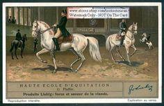 Piaffe Schooling Training Horses 1930s Card NICE!