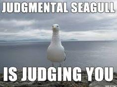 seagull meme - Google Search