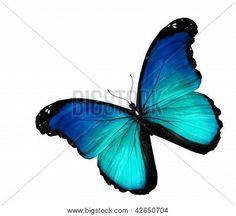 Mariposa azul sobre fondo blanco