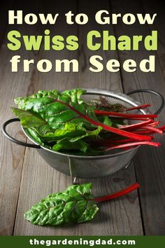 Learning How to Grow Swiss Chard from Seed is so easy and rewarding!  Learn growing, caring, harvesting, and storing tips and ideas!  And you'll even save money!  #swisschard #gardening #vegetables Healthy Fruits And Vegetables, Growing Vegetables, Gardening For Beginners, Gardening Tips, Growing Swiss Chard, Container Gardening Vegetables, Flowers Perennials, Garden Seeds, Sustainable Living