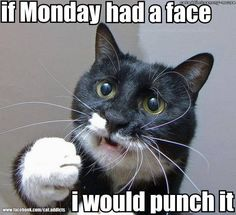 #animals #funny I have a cat that looks just link this. I HAVE kicked MONDAYS to the curb with my OWN BUSINESS. You can too! znzpromotions.com/raymajean1