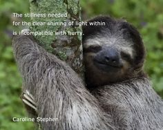If You Want Laugh and have not way to get that. Don't worry we have a collection of some Monday Memes Sleep that are so funny and humor.These Monday Memes Sleep are able to make you laugh and happy for whole day. Creepy Sloth, Funny Memes, Hilarious, Funny Stuff, Random Stuff, Funny Quotes, Jokes, Monday Memes, Chistes
