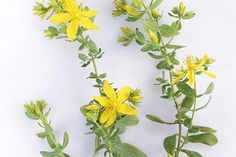 What Is St. John's Wort Used For?