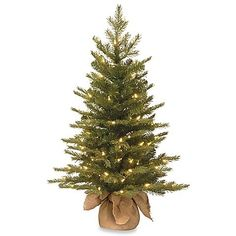 National Tree Company 36 in. Feel-Real Nordic Spruce Tree with Clear Lights National Tree Company 36 in. Feel-Real Nordic Spruce Tree with Clear Lights Small Artificial Christmas Trees, Spruce Christmas Tree, Spruce Tree, Artificial Tree, Christmas Tree Themes, White Christmas, Christmas Holidays, Cozy Christmas, Happy Holidays