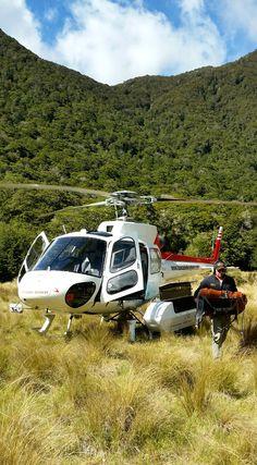 Bereit für den Flug - Inmitten der Wildnis im Fjordland Nationalpark, Neuseeland