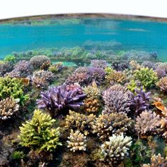 How to protect the environment? Coral Guardian is in the fight for saving the environment.