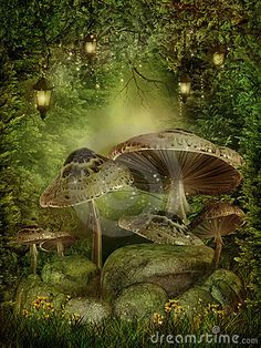 Forest mushroom | Enchanted Forest With Mushrooms Royalty Free Stock Images - Image ...