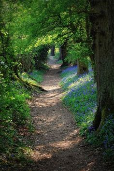 the rabbit hole. Down the rabbit hole.Down the rabbit hole. Beautiful World, Beautiful Places, Nature Landscape, Forest Path, Walk In The Woods, Parcs, Pathways, Amazing Nature, Belle Photo